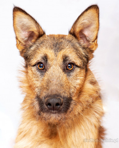 Newton - młody, inteligentny psiak szuka domu