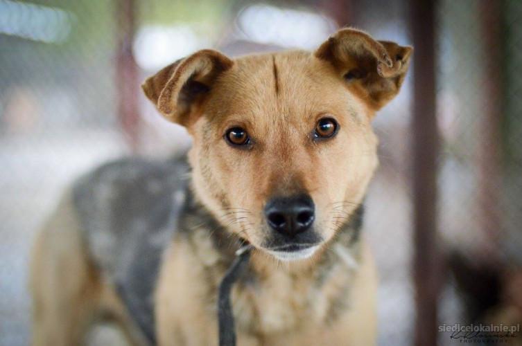 Aron - nieśmiały psiak szuka cierpliwego domu!