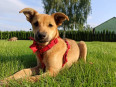 Migotka - psie dziecko, wesoła iskierka do pokochania!