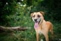 Solar - list psa z Radys...